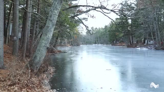 Watch and share Frozen Pond GIFs by Moodica on Gfycat