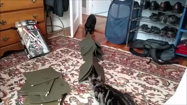 Watch file cats GIF on Gfycat. Discover more aww, webm GIFs on Gfycat