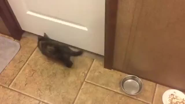 Watch and share Cat GIFs by tothetenthpower on Gfycat