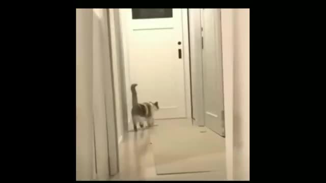 Watch and share Cat GIFs by fahmiarya on Gfycat