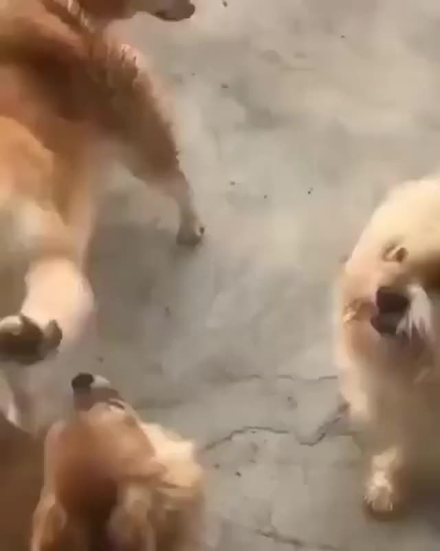 Watch and share Petting The Doggie GIFs by lookonthebrightside on Gfycat