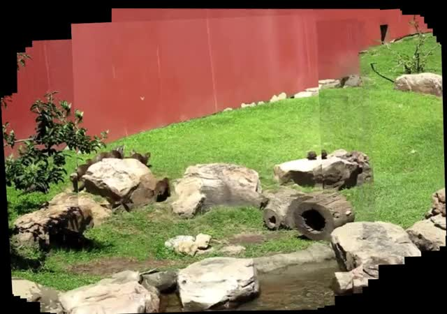 Watch and share Otter Chasing Butterfly GIFs by kyoshi on Gfycat