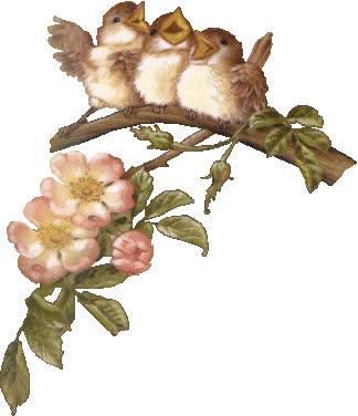 Gifs-animados-de-aves-pajaros-variados (66) GIFs