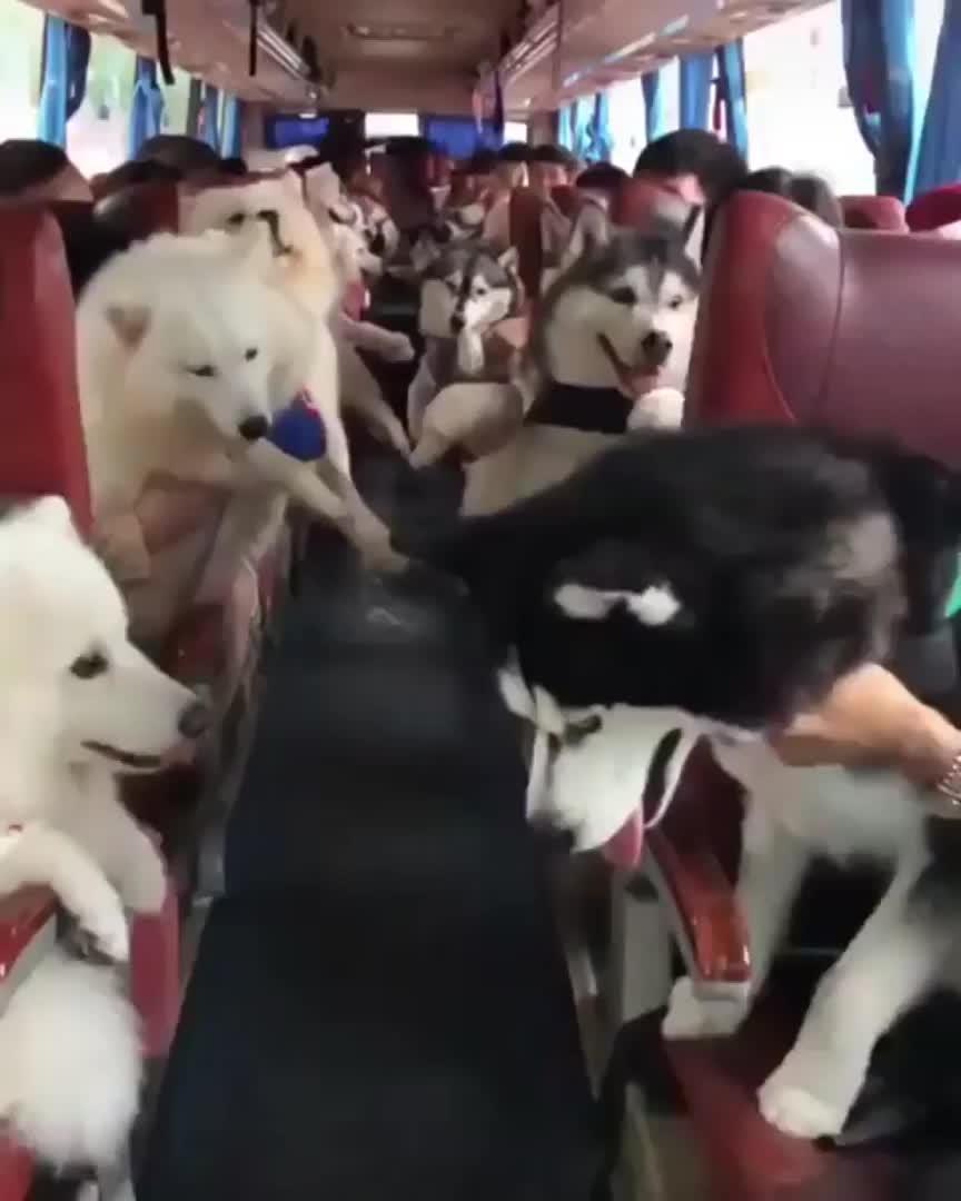 bus GIFs