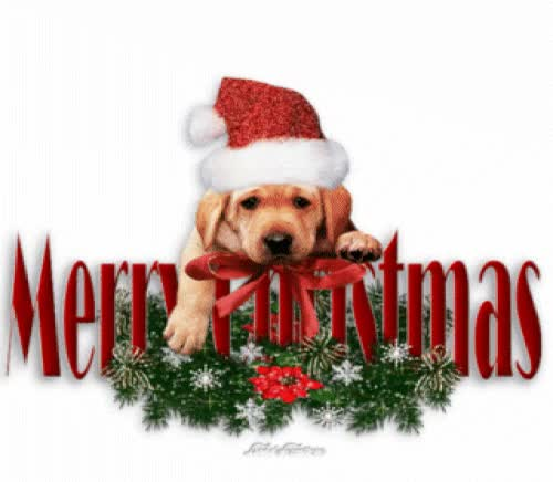 Watch and share Christmas Puppies GIFs on Gfycat