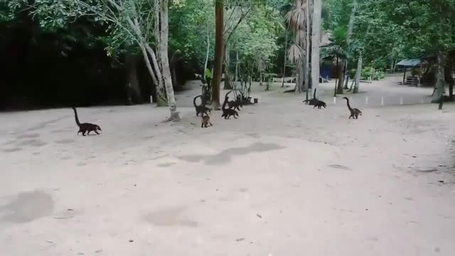 Watch Coatis in reverse look like herds of tiny brontosauruses GIF by tothetenthpower (@tothetenthpower) on Gfycat. Discover more related GIFs on Gfycat