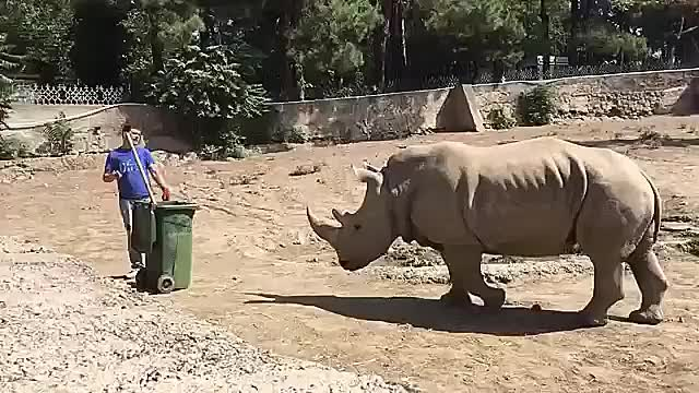 Watch This guy facing a massive Rhino with a broom GIF by HoodieDog (@testycase) on Gfycat. Discover more related GIFs on Gfycat