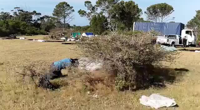 Watch and share Man Vs Thorn Bush GIFs by lovethebacon on Gfycat