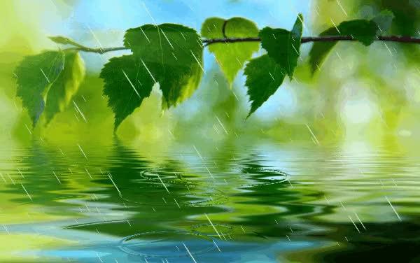 Watch Planta en la lluvia GIF by Susan (@susanlu4esm) on Gfycat. Discover more related GIFs on Gfycat