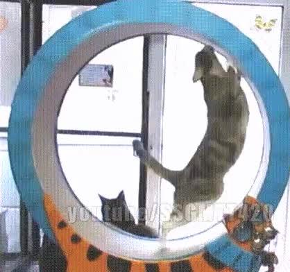 catgifs, Cats - squirrels in wheel GIFs