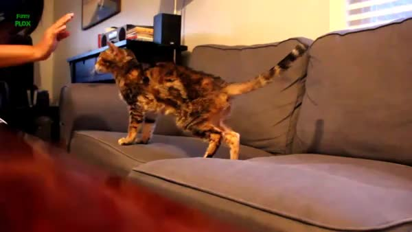 Watch and share High Five For Pets GIFs on Gfycat