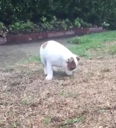 Pupper's never encountered rain before GIFs
