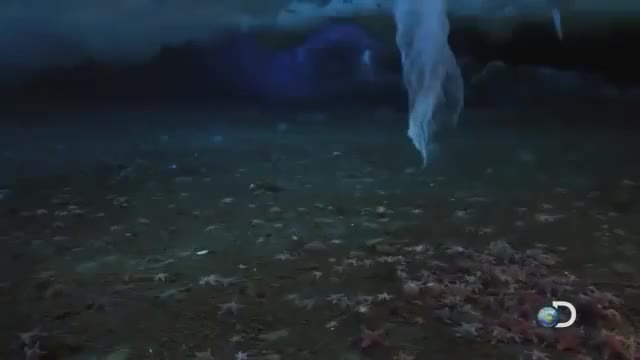 Watch and share A Brinicle Forming Under Sea Ice. (reddit) GIFs by forte2 on Gfycat