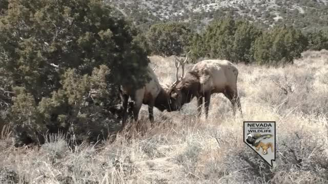 Watch 2017-03-16_09-06-09-4 GIF by @trshtehdsh on Gfycat. Discover more HumansBeingBros, ImagesOfNevada, gifs GIFs on Gfycat