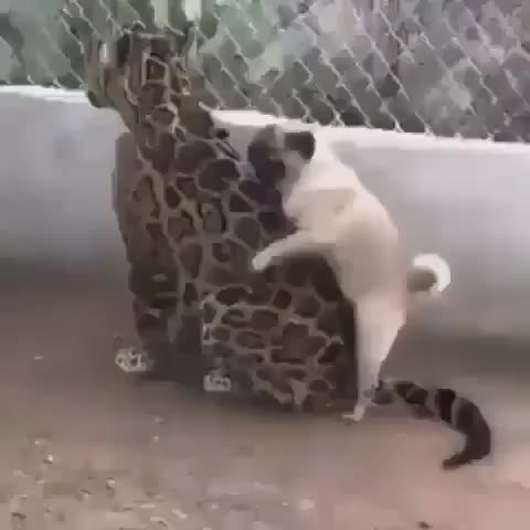 animal_curiosity, wildlife animals nature, Boy 18 years old vs. Woman 80 years old😂 ▪️ 📹Recorded by Unknown ▪️ Tag your friends👇👇👇 Use #animal_curiosity for a shoutout on one of  GIFs