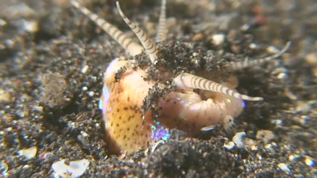 Watch and share Bobbit Worm GIFs and Ocean GIFs on Gfycat