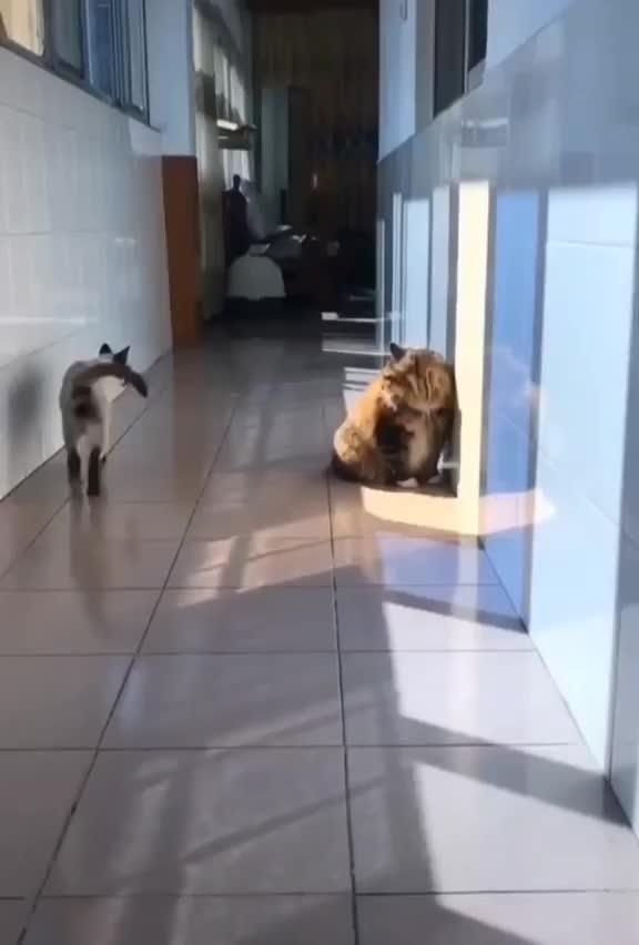 cat, cats, Ninja GIFs