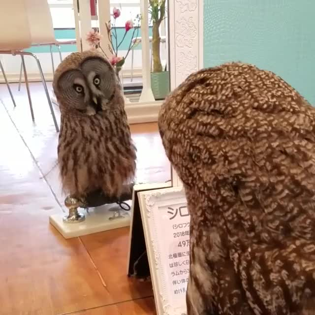Watch and share Owls GIFs by newisland on Gfycat