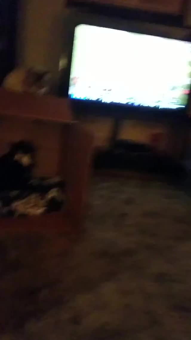 Watch 20190317 210207 GIF on Gfycat. Discover more related GIFs on Gfycat