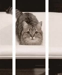 Watch and share 3D Kitty Gif GIFs on Gfycat