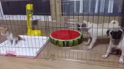 Watch and share Puppies GIFs and Kitten GIFs by ammianusmarcellinus on Gfycat