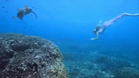Watch this trending GIF on Gfycat. Discover more gif, mermaid, mermaid gif, mermaid kariel, mermaid model, mermaid performer, mermaid swimming, mermaid swimming gif, mermaid tail, mermaids, pro mermaid, professional mermaid, real mermaid, real mermaids, sea turtle, turtle, underwater, underwater gif GIFs on Gfycat