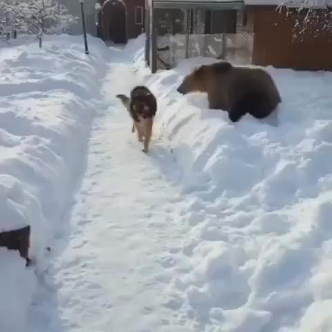 Nature is Amazing 🐧 - Bear: RAWR I'M A BEAR 🐻 Dog: I DON'T CARE 🐶