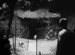 Watch The Past I Admire GIF on Gfycat. Discover more 1900s, 1910s, 1920s, 1930s, china, lingyu ruan, shanghai, silent actress, silent cinema, silent film, silent movie GIFs on Gfycat