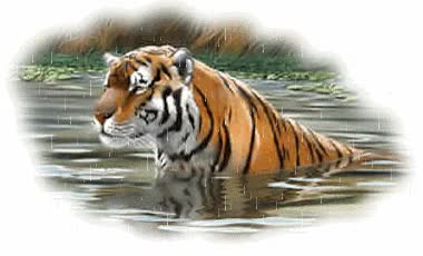 Watch Tigers Glitter Gifs GIF on Gfycat. Discover more related GIFs on Gfycat