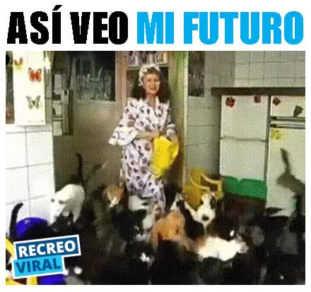 Watch and share FUTURO GIFs on Gfycat