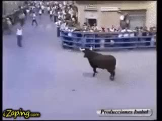 Watch and share Bull GIFs on Gfycat