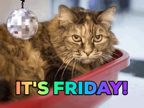 Watch this friday GIF by The GIF Smith (@sannahparker) on Gfycat. Discover more cat, friday, party, tgif, weekend GIFs on Gfycat