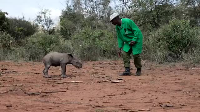 Watch and share Orphanrhino GIFs and Babyrhino GIFs by b12ftw on Gfycat