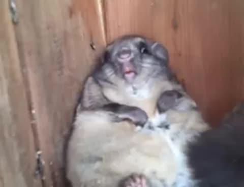 fat, squirrel, Horrible Fat Squirrel GIFs