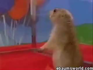 Epic squirrel