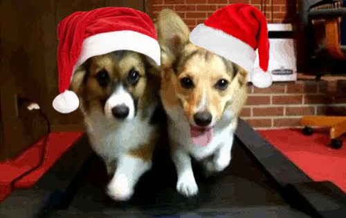 christmas, dog, fit, gym, out, pet, puppy, run, work, working, xmas, Xmas pets GIFs