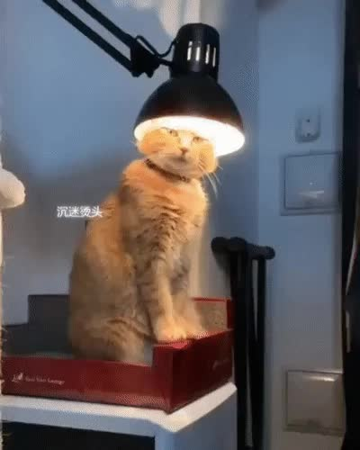 Watch and share Lamp GIFs and Cat GIFs by Frostwaker on Gfycat