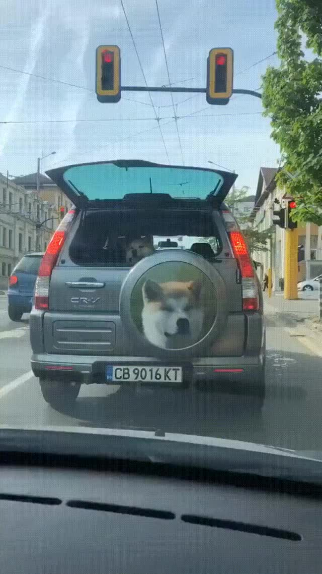 Watch and share Doge GIFs by Hanna on Gfycat