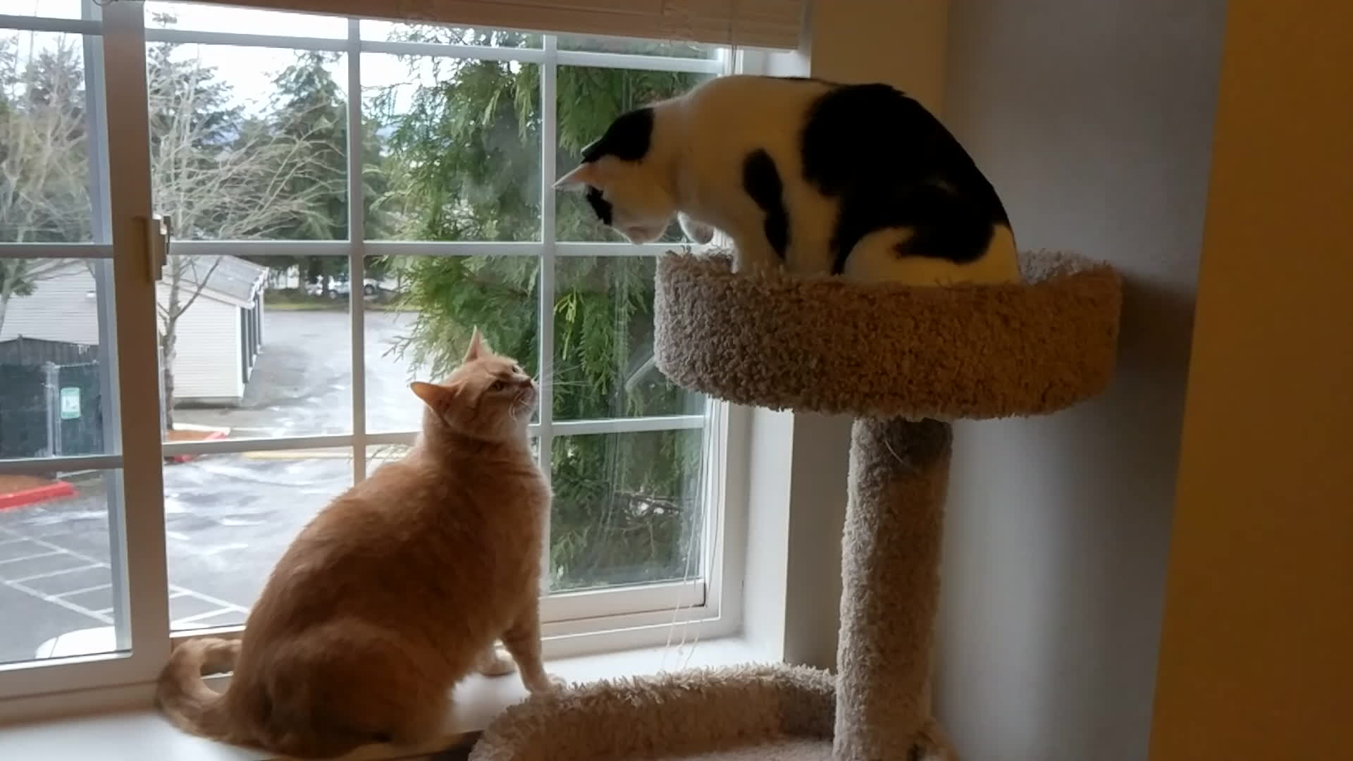 cat taps and slaps, catslaps, kitten,  GIFs