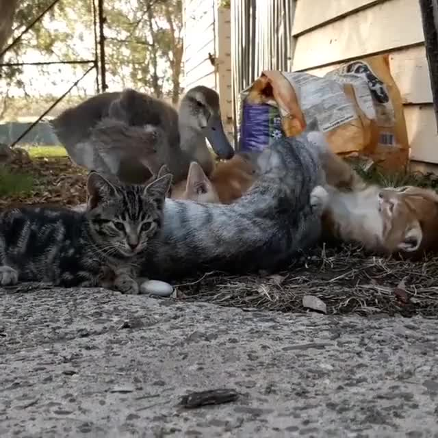 Watch Video by homebush_farm GIF by awkwardtheturtle on Gfycat. Discover more awkwardtheturtle GIFs on Gfycat