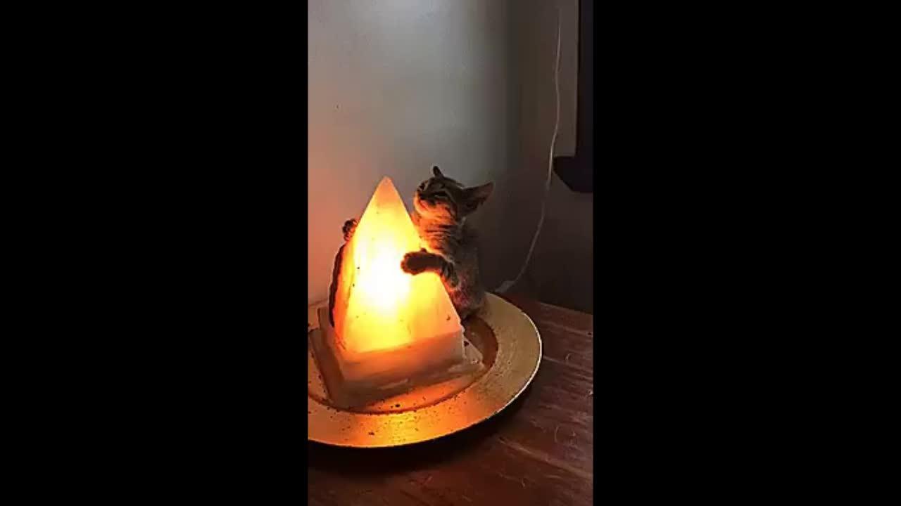 Кот лампа гифка, картинках ответами прикольные