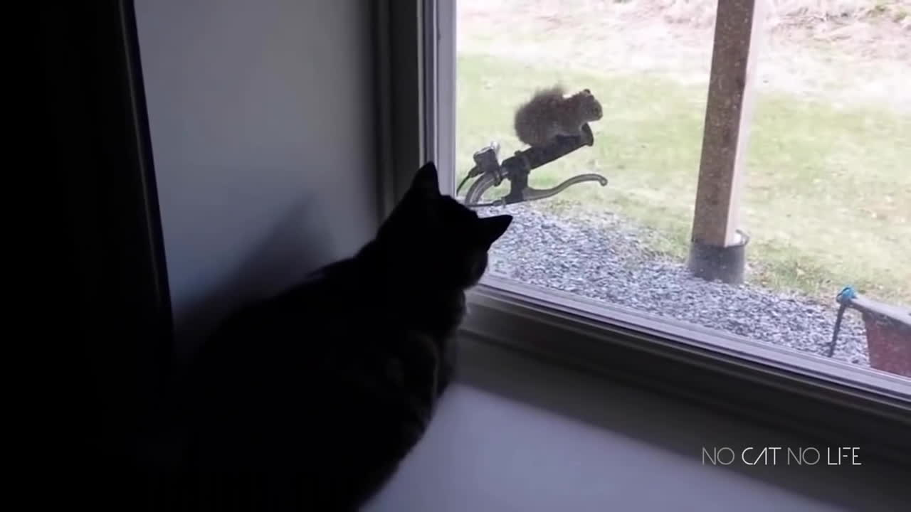 StartledCats, startledcats, Приколы с котами - ТОПовая подборка! GIFs