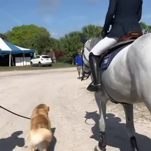 barnlife, bffs, cutenessoverload, dailyfluff, doggo, dogs, dogsofinstagram, dogstagram, farmlife, gloriousgoldens, golden, goldenretriever, goldenretrievers, goldenretrieversofinstagram, goldensofinstagram, goodboy, horsesofinstagram, ilovemydog, instagolden, weeklyfluff, giving the horse a pep talk GIFs