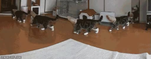 Watch Maru GIF on Gfycat. Discover more related GIFs on Gfycat
