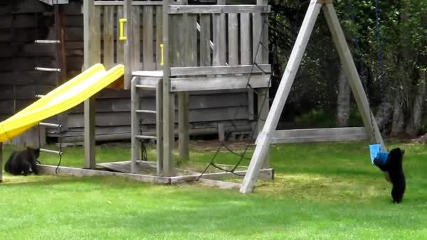bearcubgifs, Cubbie doesn't know how to swing (reddit) GIFs