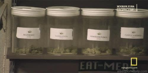 420, American Weed, buds, cannabis, ganja, green, herb, kush, marijuana, mary jane, medical marijuana, mmj, nat geo, natgeo, national geographic, pot, stoner, television, tv, weed, American Weed - Weed jars GIFs