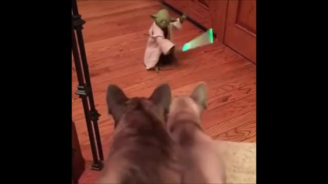 Watch and share Dogs GIFs and Yoda GIFs on Gfycat
