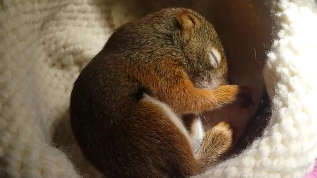 Watch Baby Squirrel Dreaming GIF by Slim Jones (@slimjones123) on Gfycat. Discover more baby, orphan, squirrel GIFs on Gfycat
