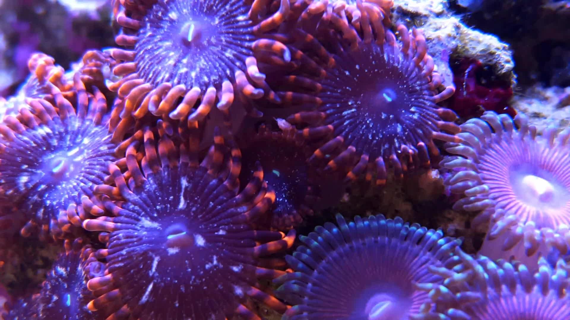 aquariums, reeftank,  GIFs