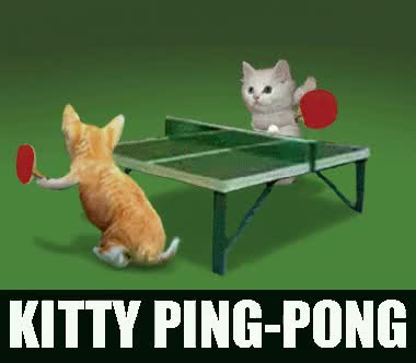 Watch and share Ping Pong Cat GIFs on Gfycat